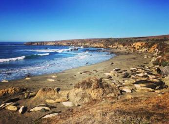 Elephant seals sunbathing