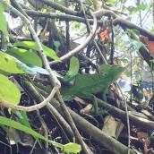 7. La iguana